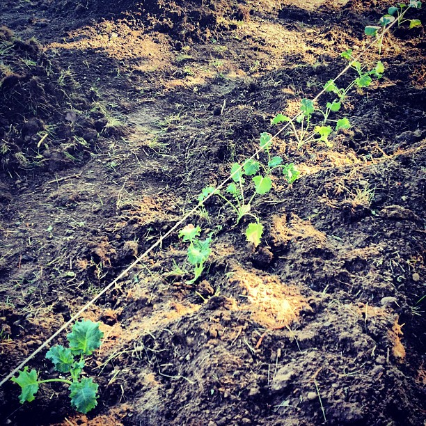 Kappa_Sigma_s_new_garden_